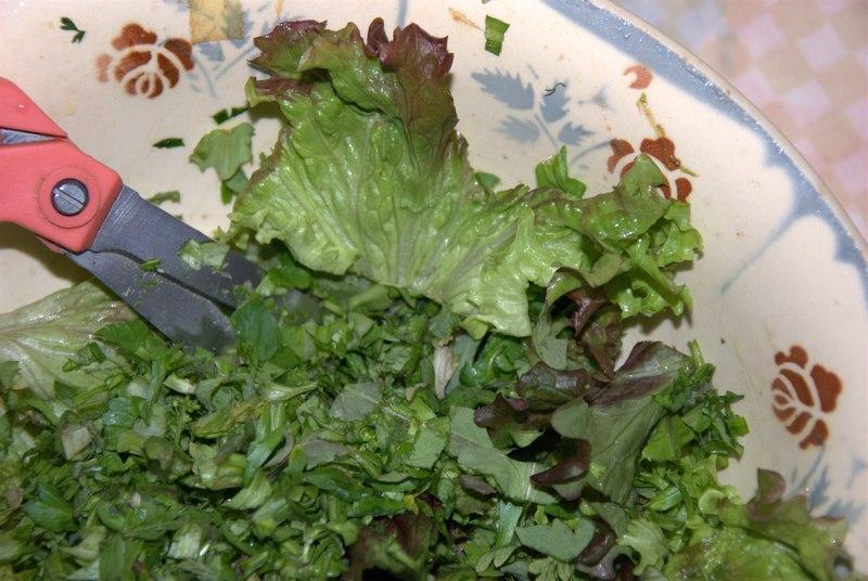salade sauvage 1