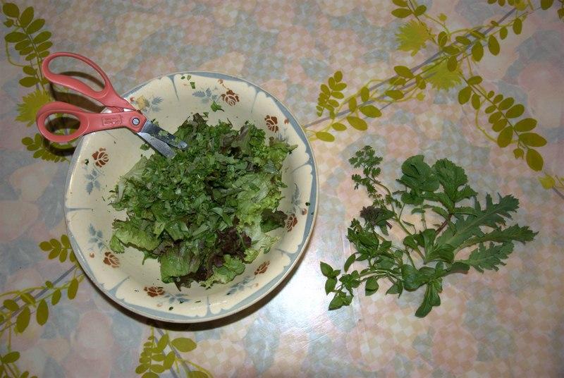 salade sauvage 2