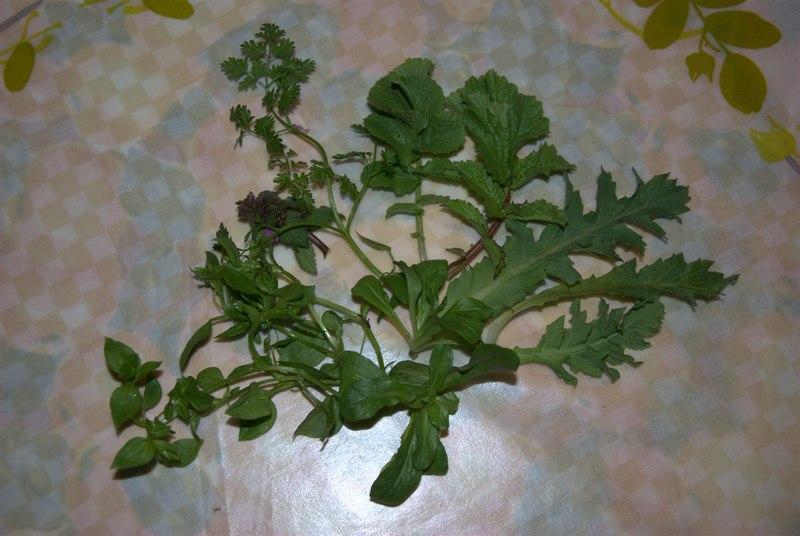 salade sauvage 3
