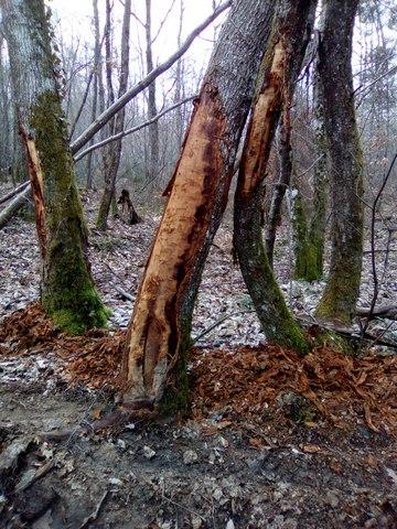 arbre abimé 1