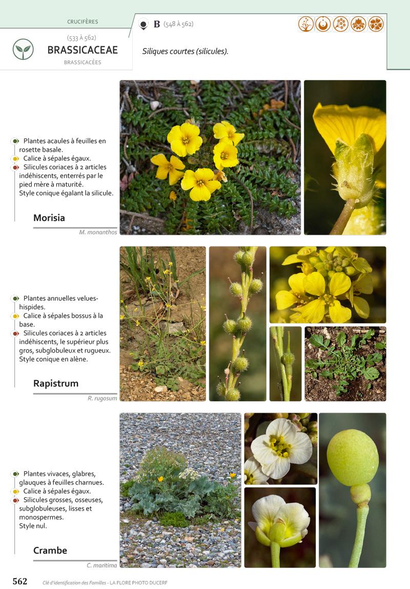 plantes évoluées des angiospermes