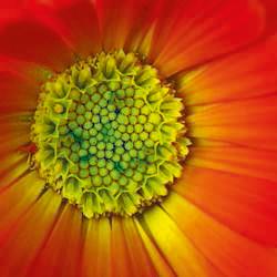 Flore botanique